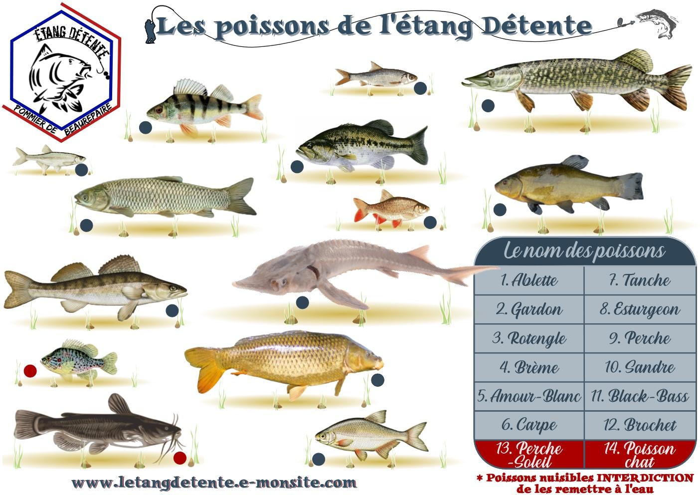 Jeux enfants retrouver les poisson etang detente 38 pommier de beaurepaire isere peche carpe brochet carnassier 1